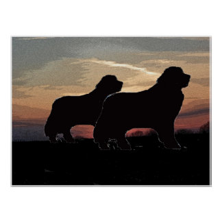 Two Newfoundlands poster