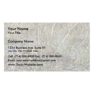 Two nutria business card template