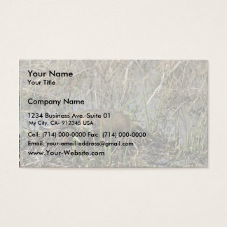 Two nutria business card