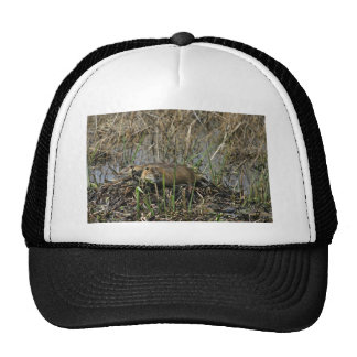 Two nutria trucker hat