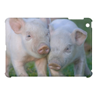 Two Nuzzling White Piglets - Cute Baby Animals iPad Mini Cases