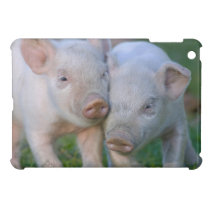 Two Nuzzling White Piglets - Cute Baby Animals iPad Mini Cover