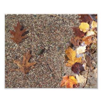 Two Oak Leaves Photograph