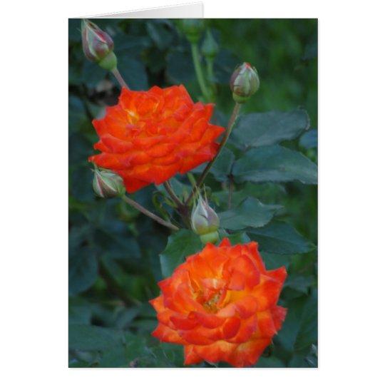 Two Orange Roses Card