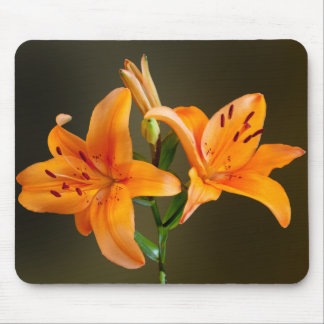 Two Orange Tiger Lillies and Buds Photograph Mouse Pad