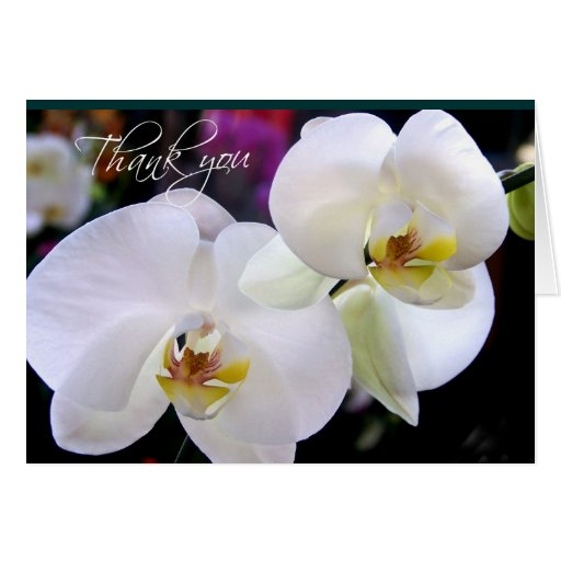 Two Orchid thank you note cards