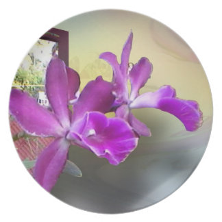 Two Orchids Party Plates