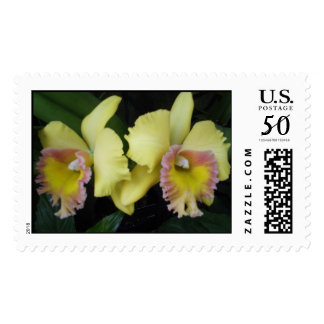 Two Orchids Postage