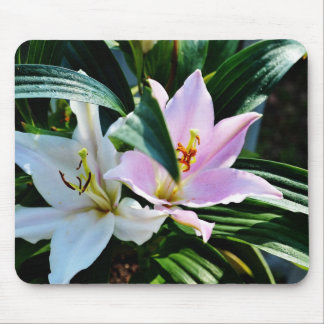 Two Oriental Lilies Mouse Pad
