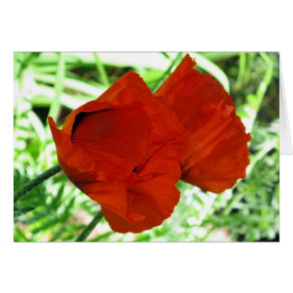 Two Oriental Poppies Birthday Card