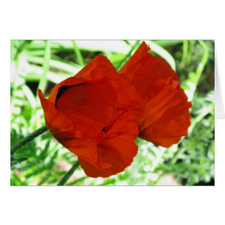 Two Oriental Poppies Card