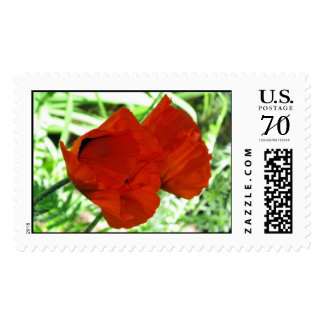 Two Oriental Poppies – Large stamp