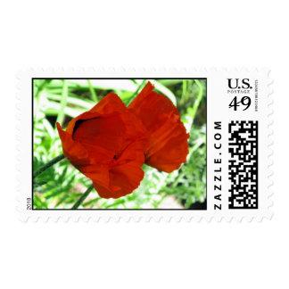 Two Oriental Poppies – Medium stamp