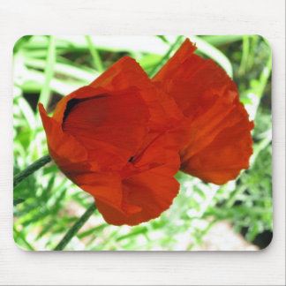 Two Oriental Poppies Mouse Pad