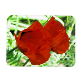 Two Oriental Poppies Rectangular Photo Magnet