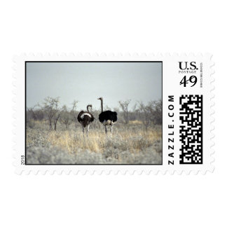 Two ostriches postage