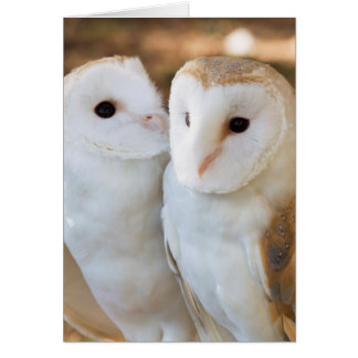 two owls friends greeting card