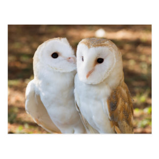 two owls friends postcard