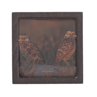Two Owls on Sand Gift Box