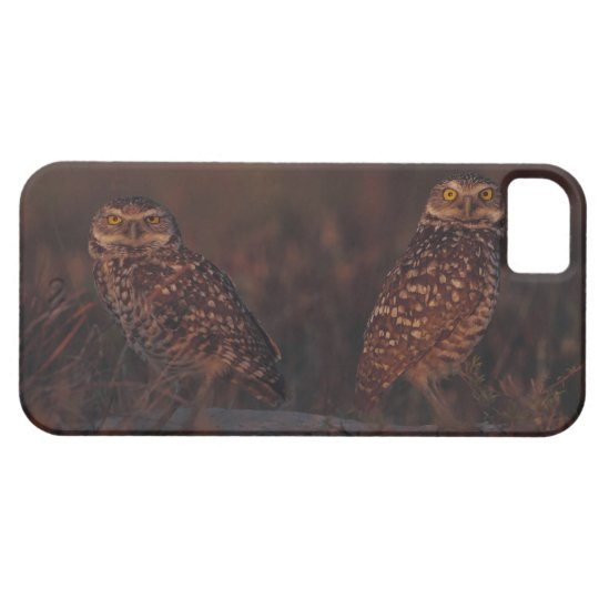 Two Owls on Sand iPhone SE/5/5s Case
