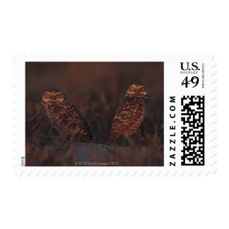 Two Owls on Sand Postage