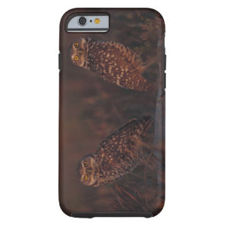 Two Owls on Sand Tough iPhone 6 Case