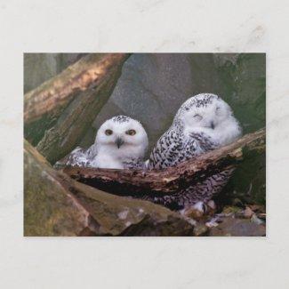 Two Owls Postcard