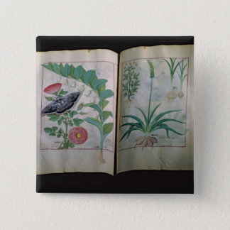 Two pages depicting Rose and Garlic Pinback Button
