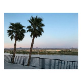 Two Palm Trees Colorado River in Laughlin Nevada Postcard