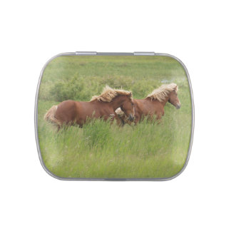 Two Palomino Horse Friends & Field Equine Photo Jelly Belly Tins