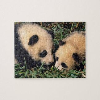 Two panda cubs in the bamboo bush, Wolong, Jigsaw Puzzle