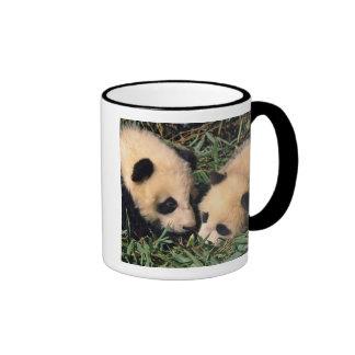 Two panda cubs in the bamboo bush, Wolong, Ringer Mug
