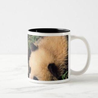 Two panda cubs in the bamboo bush, Wolong, Two-Tone Coffee Mug