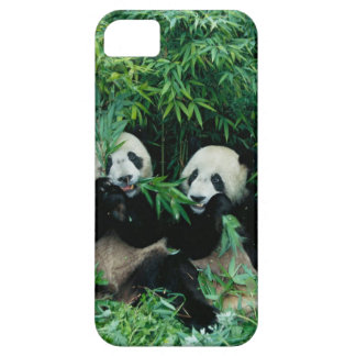 Two pandas eating bamboo together, Wolong, 2 iPhone SE/5/5s Case