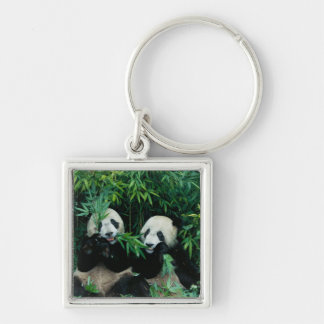 Two pandas eating bamboo together, Wolong, 2 Keychain