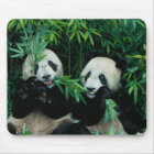 Two pandas eating bamboo together, Wolong, 2 Mouse Pad