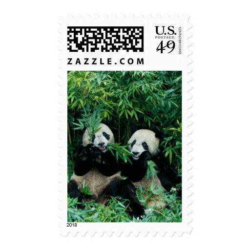 Two pandas eating bamboo together, Wolong, 2 Stamp