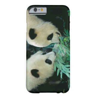 Two pandas eating bamboo together, Wolong, Barely There iPhone 6 Case