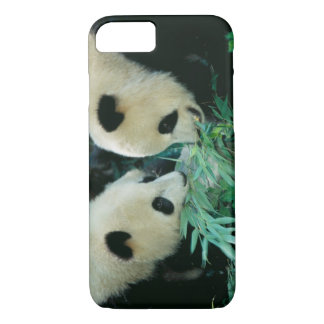 Two pandas eating bamboo together, Wolong, iPhone 8/7 Case