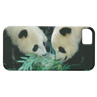 Two pandas eating bamboo together, Wolong, iPhone SE/5/5s Case