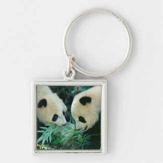Two pandas eating bamboo together, Wolong, Keychain