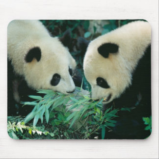 Two pandas eating bamboo together, Wolong, Mouse Pad