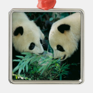 Two pandas eating bamboo together, Wolong, Square Metal Christmas Ornament