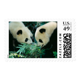 Two pandas eating bamboo together, Wolong, Postage