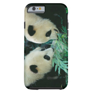 Two pandas eating bamboo together, Wolong, Tough iPhone 6 Case