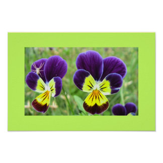 Two Pansies, One Hitchhiker Posters