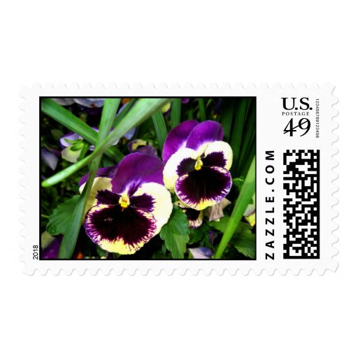 Two pansy flowers stamp