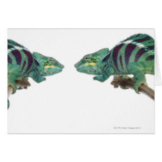 Two Panther Chameleons Nosy Be (Furcifer) Card