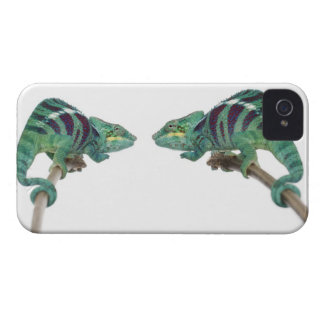 Two Panther Chameleons Nosy Be (Furcifer) iPhone 4 Case-Mate Cases
