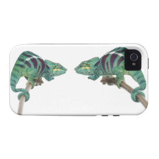 Two Panther Chameleons Nosy Be (Furcifer) Vibe iPhone 4 Case